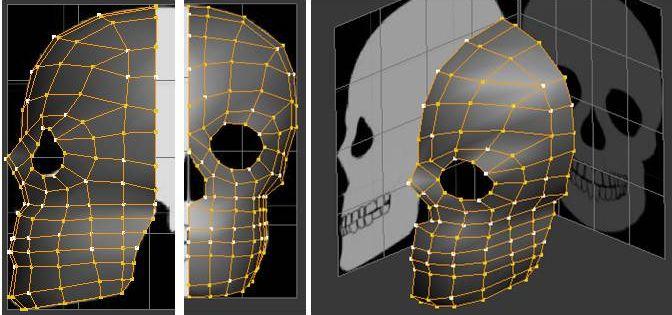 Front Half of the Skull Spline Cage
